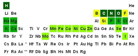 Незаменимые минеральные соли